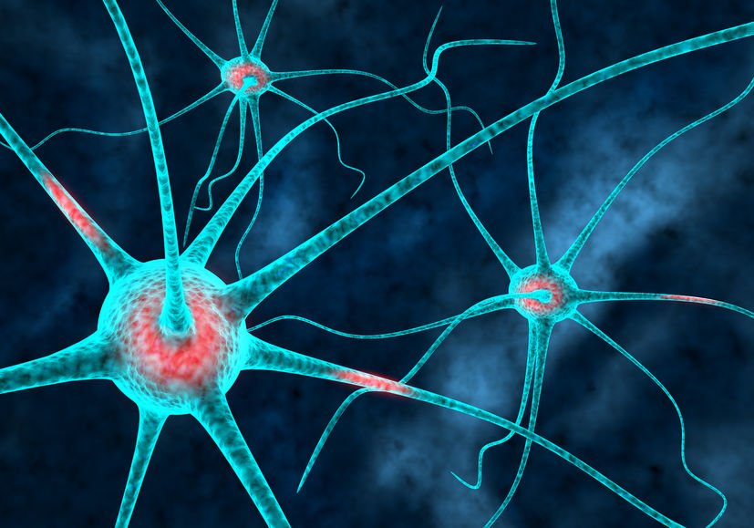 energizing supplements affect synapses