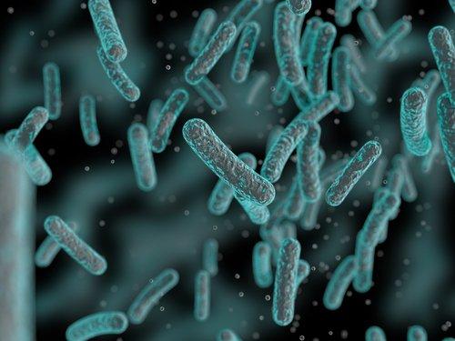 built environment microbes