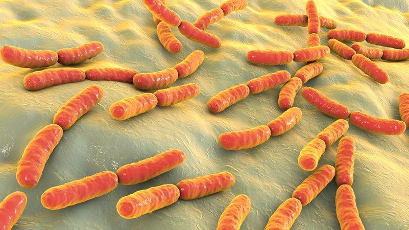 gut bacteria immune system